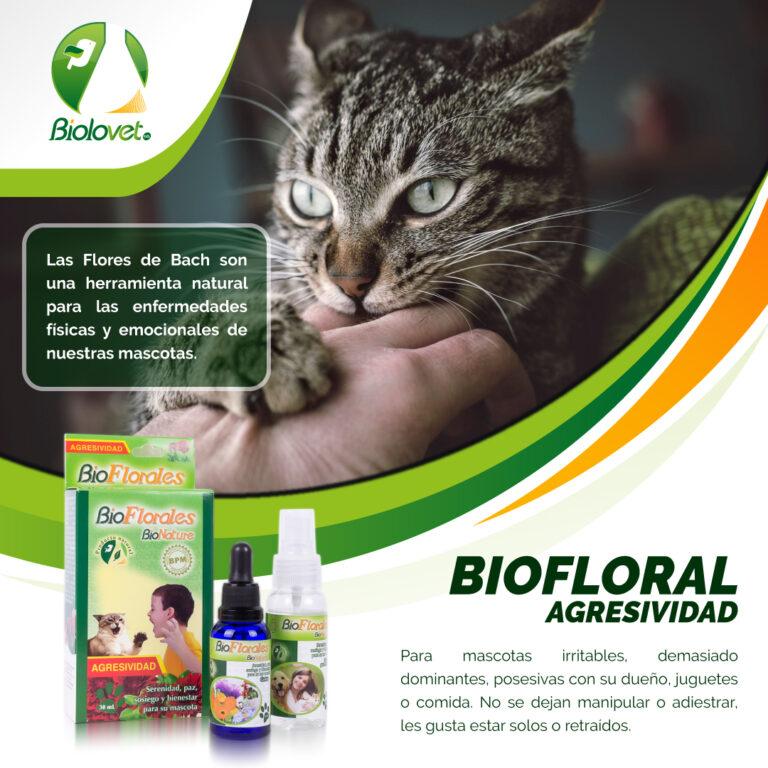 campaa-bioflores-agresividad